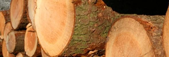 Massief hout